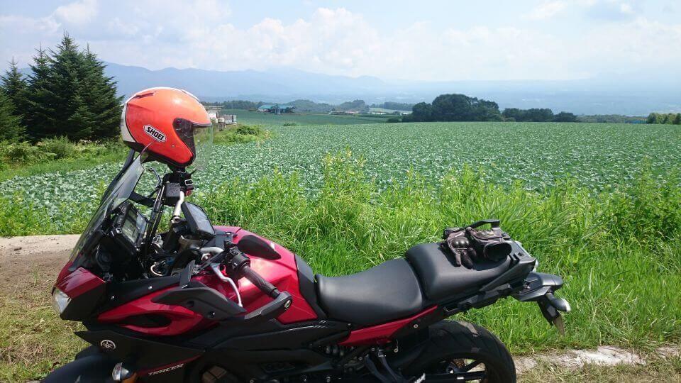 嬬恋村のキャベツ畑