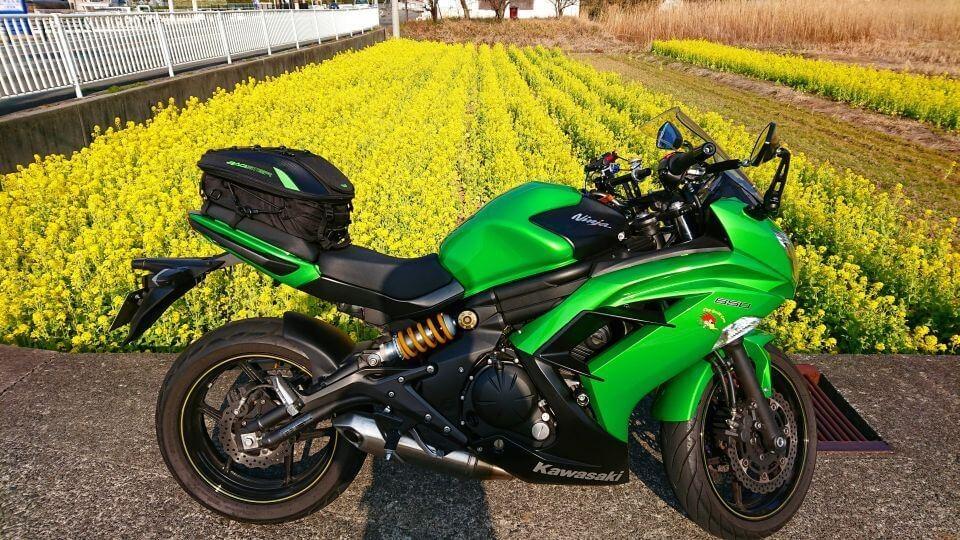 Ninja 650と菜の花