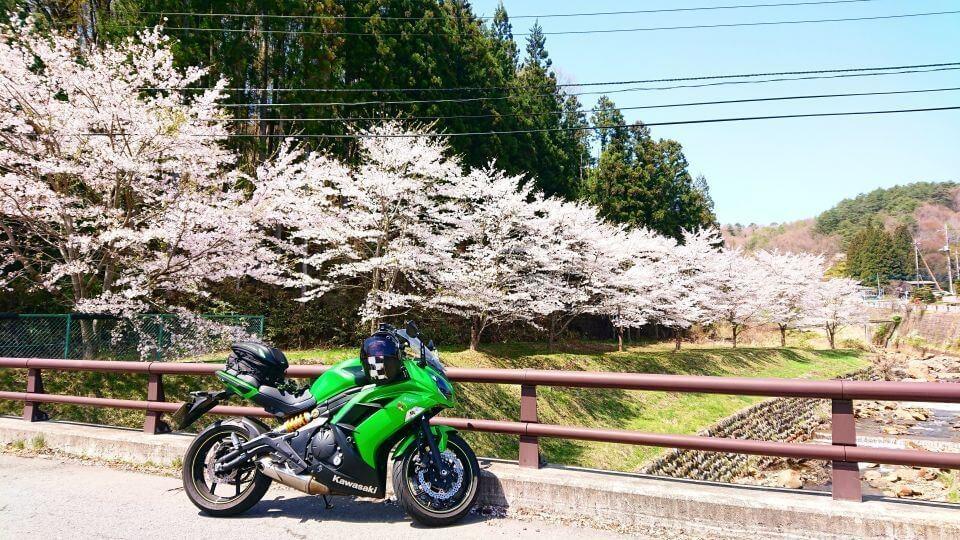 草津近辺の桜